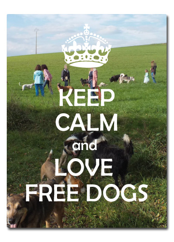 FREE DOGS